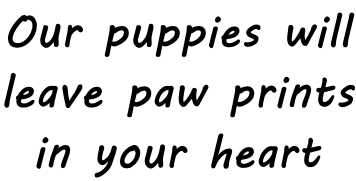 Our puppies will leave paw prints in your heart